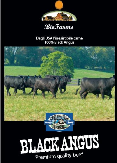 Il Black Angus  libero nei pascoli